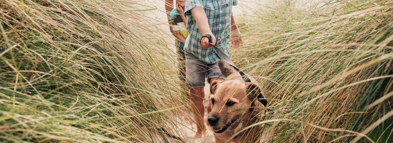 Walking dog on beach on holiday
