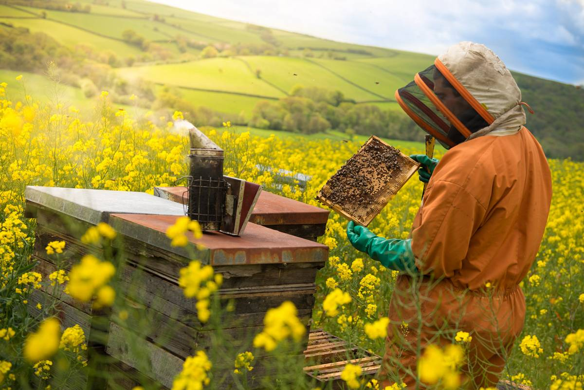 Bee Keeping at Quince Honey Farm North Devon