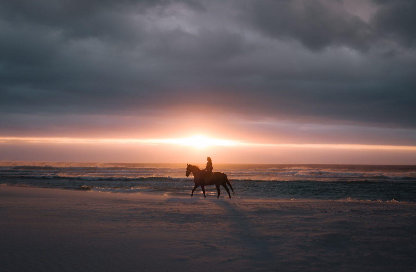 Horse rising on Woolacombe Beach North Devon